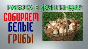 seasonal work in white mushrooms seasonal work in white mushrooms