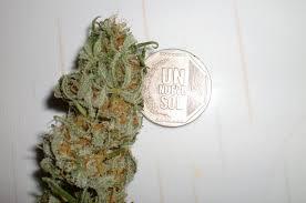Resultado de imagen de Cocaine Legalization