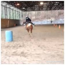 speed barrels jubliee~langs horse and pony farm speed barrels jubliee~langs horse and pony farm