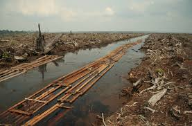 riau deforestation jpg
