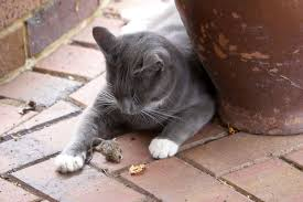 Why Do <b>Cats</b> Bring Home <b>Dead</b> Animals | <b>Cats Dead</b> Mice | Live ...