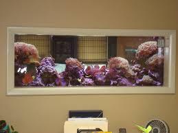 aqua culture pictures aquarium office