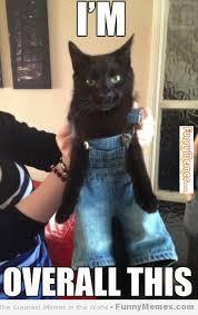 FunnyMemes.com • Cat memes - [I'm overall this] via Relatably.com