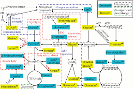 fig   schematic diagram of the perturbed metabolic pathways    context