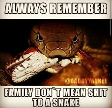 Image result for bitches in heat, snakes in grass