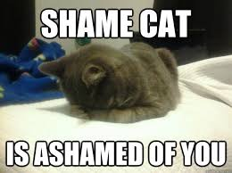 Shame Cat memes | quickmeme via Relatably.com
