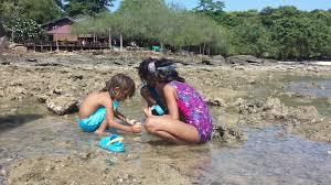 beach activities essay  beach activities essay