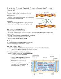 the muscular system sliding filament theory essay the muscular system sliding filament theory essay by danalynn8