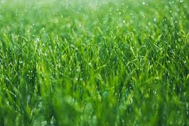 Image result for grass is greener syndrome
