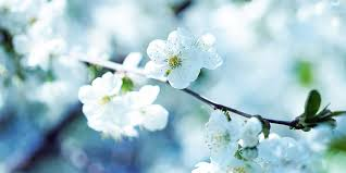 Image result for spring nature photos
