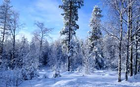 """Résultat de recherche d'images pour """"images forêt en hiver"""""""