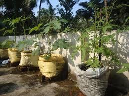 organic kitchen farming