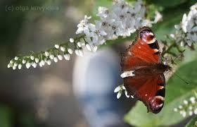 Я садовником родился...: paramoribo — LiveJournal