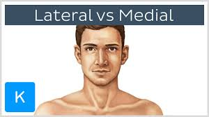 video medial vs lateral kenhub