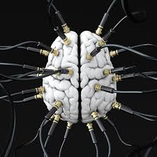 How Your <b>Brain</b> Is Wired Reveals the Real You - Scientific American