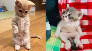 Baby Cats - Cute and <b>Funny Cat</b> Videos Compilation #17 | Aww ...