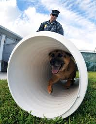 u s department of defense photo essay navy petty officer 2nd class justin sosa directs hopski a military working dog through
