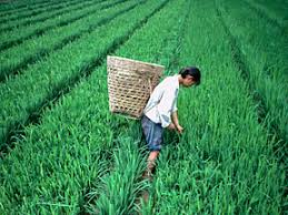 Agriculture as a global village 1