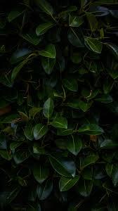 Download wallpaper 480x854 <b>leaves</b>, <b>plant</b>, green, <b>dark</b>, <b>branches</b> ...