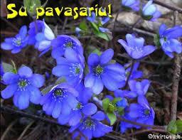 Image result for pavasario vaizdai