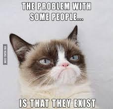 grumpy cat on Pinterest | Grumpy Cat Meme, Grumpy Cat Quotes and Meme via Relatably.com