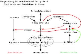 ch   lec  decregulation of fatty acid metabolism