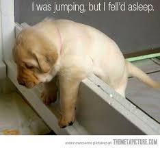 LOL Cute Animals via Relatably.com