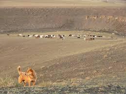 """Résultat de recherche d'images pour """"désert du Gobi"""""""