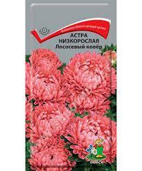 <b>Астра низкорослая</b> Лососевый <b>Ковёр семена</b> купить в Москве по ...