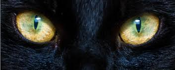 Here's Why <b>Cats</b> Have Such Strange, Haunting <b>Eyes</b>, Explained by ...