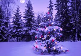 Výsledok vyhľadávania obrázkov pre dopyt vianočný stromček