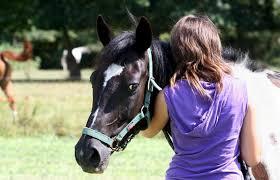 """Résultat de recherche d'images pour """"chute cheval impressionnante"""""""