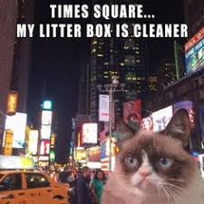 Grumpy Cat on Pinterest | Funny Grumpy Cats, Grumpy Cat Meme and ... via Relatably.com