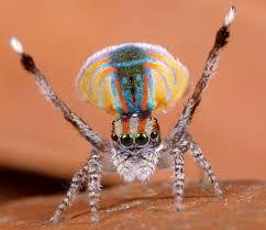 """Résultat de recherche d'images pour """"images ou photo, le cri et l'araignée"""""""