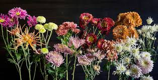 Colorful Cool-Season Blooms to Brighten Up the <b>Fall</b> and <b>Winter</b> ...