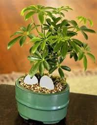 interior decor has many facets it increases the pleasure of our living and soothes our feelings for interior decoration indoor plants add a special charm charming office plants