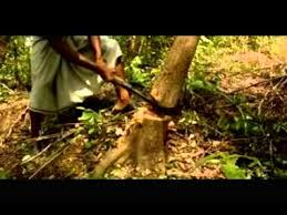 natural forest conservation   youtube