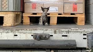 Кот доехал зайцем из <b>Туниса</b> в Германию в опломбированном ...