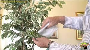 Risultati immagini per lavare piante con batuffolo cotone