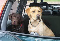 Παίρνουμε μαζί το σκύλο μας στο αυτοκίνητο;