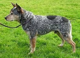 Πόσο έζησε ο μακροβιότερος σκύλος;