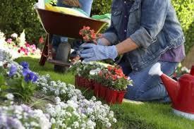 Resultado de imagen para jardin para plantar