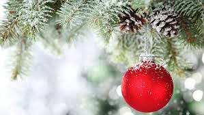 Image result for Advices on choosing the Christmas tree to deliver via online