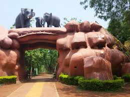 bhubaneshwar elephant sanctuary photo essay brad beaman chandaka dhampara sanctuary photo essay 1