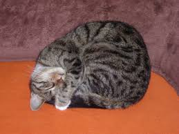 An interesting cat fact is that when we are asleep in a tight ball, we are in deep sleep