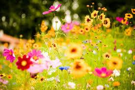 Spring flowers sun