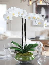day orchid decor: impressive arrangements made with elegant orchid flowers exquisite wrapping hand written personal message next day flower delivery anywhere in nyc
