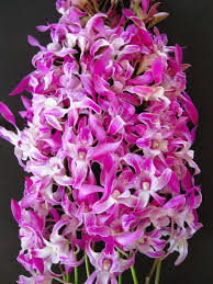 day orchid decor: mothers day orchid flowers express your wishes of love and adoration because they are long lasting and beautiful to look at mothers day orchid flowers