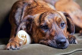 Acting Sad in Dogs - Definition, Cause, Solution, Prevention, Cost