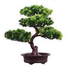 Деревья <b>бонсай</b> ЦВЕТОЧНЫЙ ДЕКОР - огромный выбор по ...